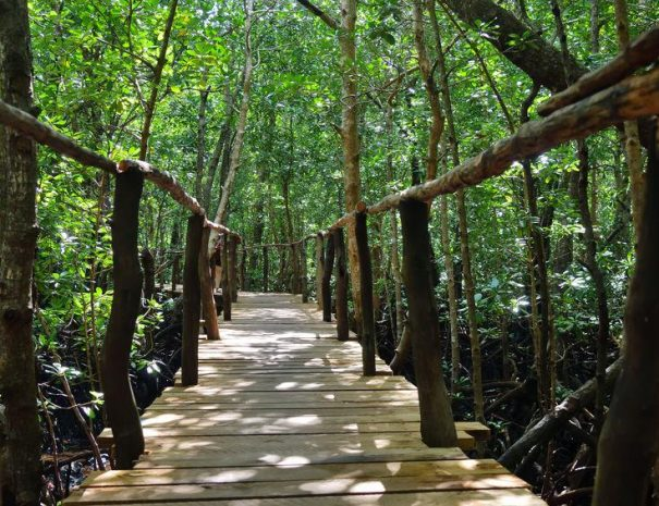 Jozani Forest Travelling From Stone Town Or The West Coast – Zanzibar Travel Guide